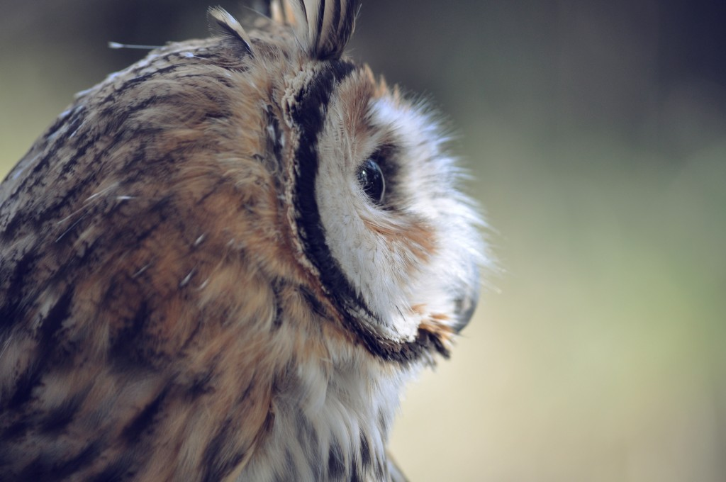 Where to Hear (and Maybe See) Owls in Philadelphia Thumbnail
