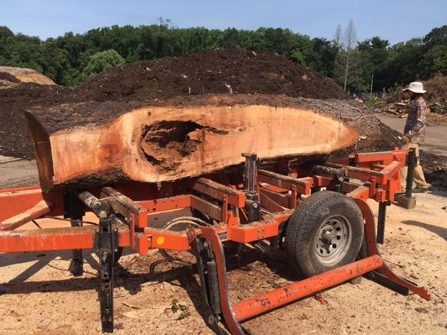 A new life for fallen Fairmount Park trees Thumbnail