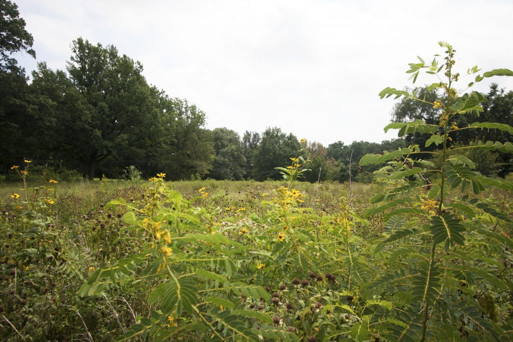 A wildflower meadow movement is blooming in Fairmount Park Thumbnail
