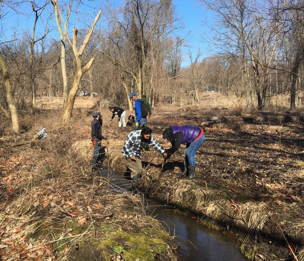 1,000 live stakes planted along the streams at Fairmount Park Horticulture Center Thumbnail