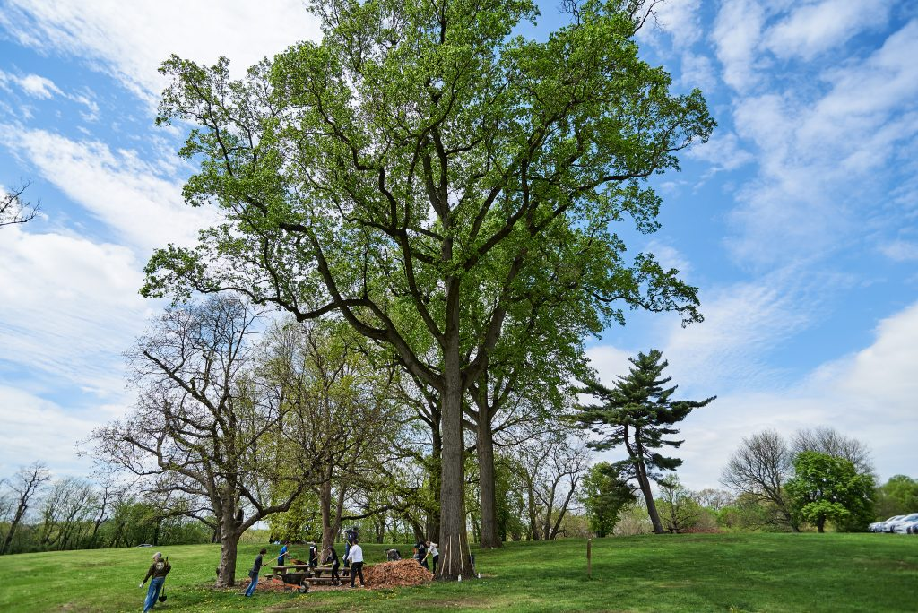 Fairmount Park Conservancy's 2019 Year in Review Thumbnail