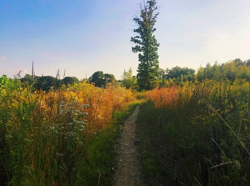 Wissahickon Hike with Brad Maule Thumbnail