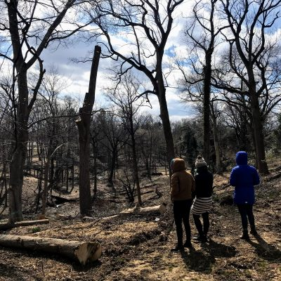 Forest Restoration Tour