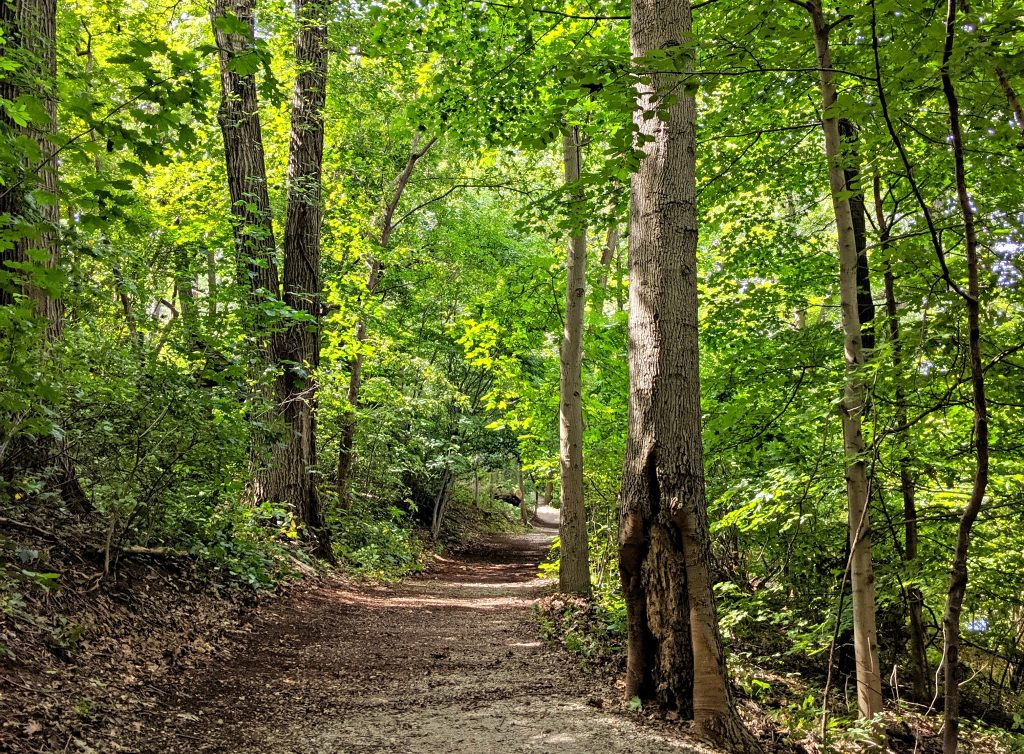 7 actions Philadelphians can take to protect our urban forest Thumbnail