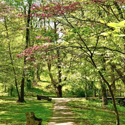 Guided Hike & Meditation: Fairmount Park Hort...
