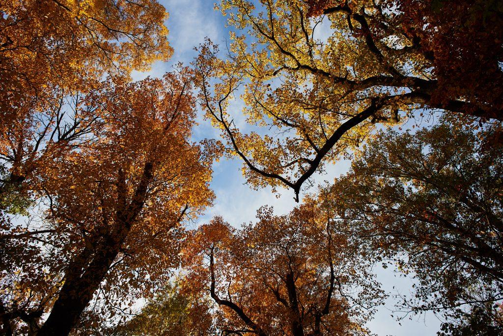 OcTOURber in Fairmount Park: Trees of the Centennial Arboretum Thumbnail