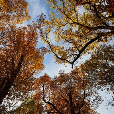 OcTOURber in Fairmount Park: Trees of the Centenni...