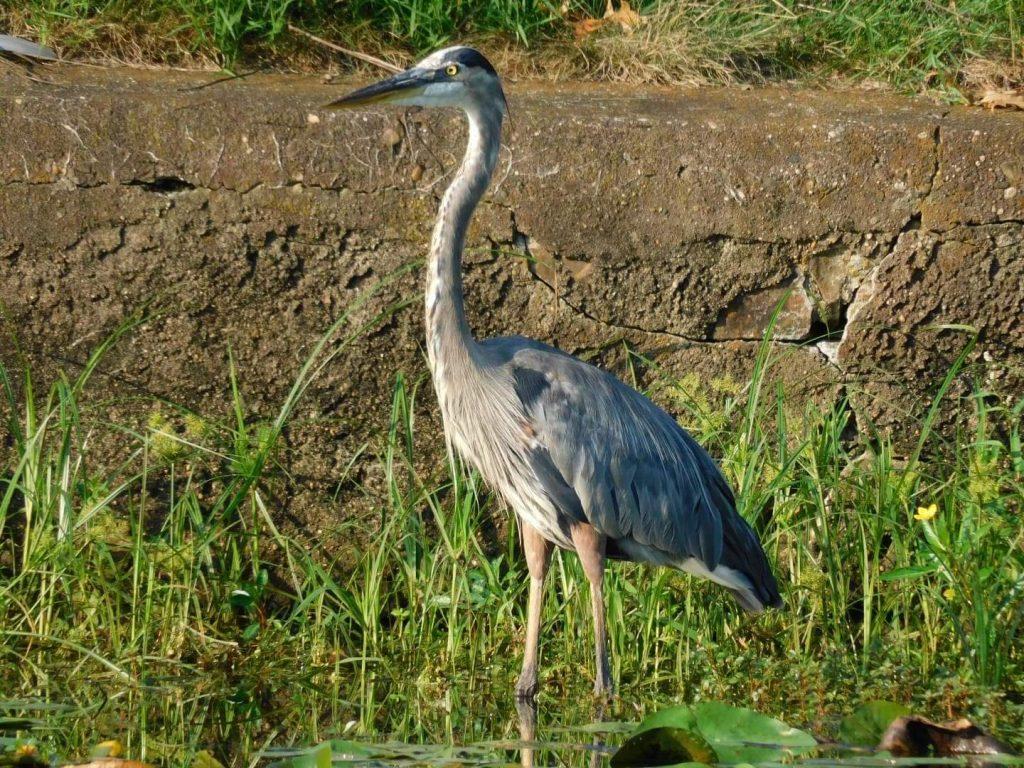 Virtual Birding 101 with Gina Gilliam Thumbnail