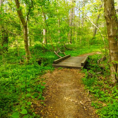 Tree Tour and Hike on the Trolley Trail
