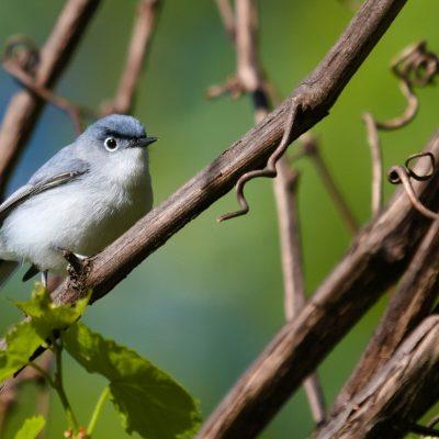Bird Talk: A conversation about birds & birdi...