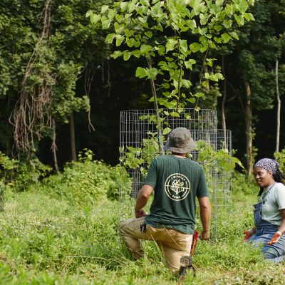 CANCELED: Wednesday Weeding at George's Hill