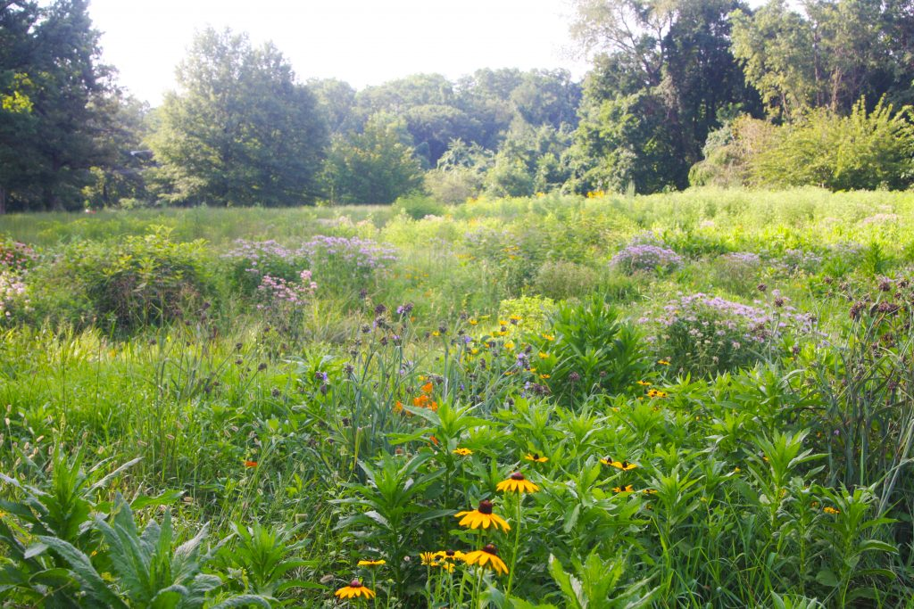 Mows to Meadows project will bring 5 acres of meadows to Fairmount Park Thumbnail