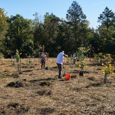 Tree Planting in Tacony Creek Park